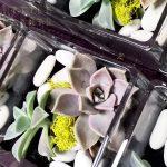 shop glass cube living succulent gift