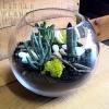 shop terrarium fishbowl succulents