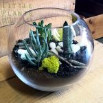 shop terrarium fishbowl succulents