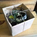 shop terrarium fishbowl gift gold coast delivery