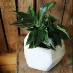 concrete pot with indoor plant Gold Coast gift delivery