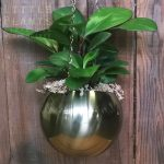 indoor plant in brass haning pot
