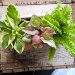 shop living plant indoor plant gift gold coast