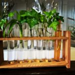 home decor test tubes growing plants Gold Coast