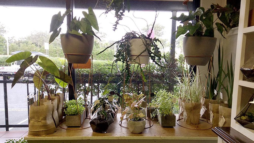 gold coast gift plants