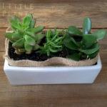 succulent plants gift delivered Gold Coast