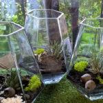 houseplant gift delivered Gold Coast