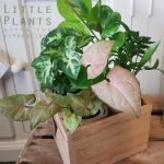 plants in wood box delivered gold coast