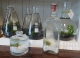 aquatic plants in glass flasks and vintage bottles gold coast plants delivered