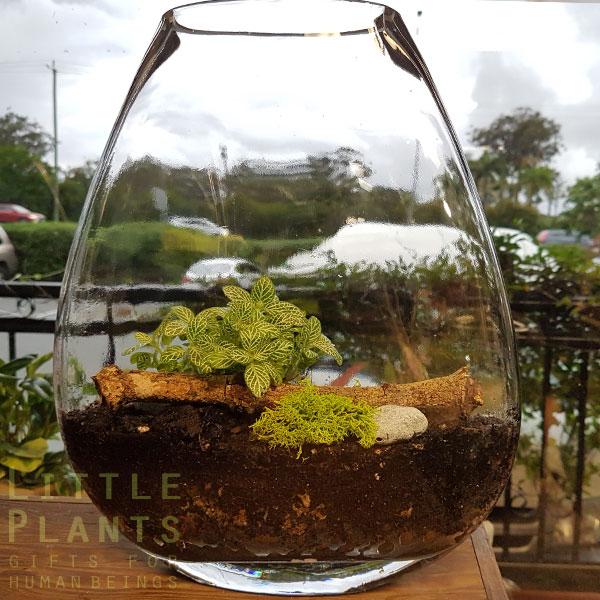 2d-terrarium gold coast gift plant delivery