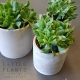 concrete-succulent living gift gold coast