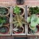 succulent plants concrete pot Gold Coast delivery