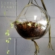 little plants chain-of-hearts terrarium gold coast gifts