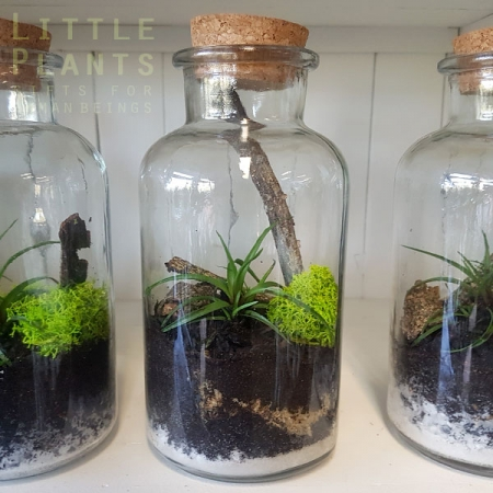 cork-bottle-mini-terrarium gold coast plant gift