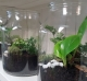 jar terrarium gold coast plant gifts