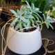 succulent plant gift for gold coast delivery